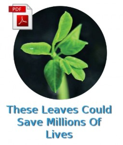 These Leaves Could Save Millions of Lives PDF 2